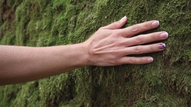 slow motion of woman hand touching softly the moss on the wall in the tropical rainforest. - stan naturalny filmów i materiałów b-roll