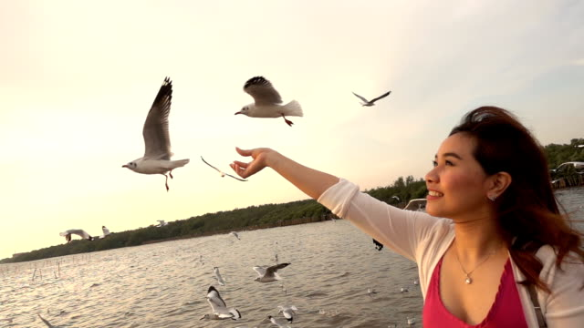 Slow motion of Young woman feeding seagulls on tropical beach in Thailand video