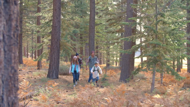 Slow motion panning shot of family walking past in a forest video