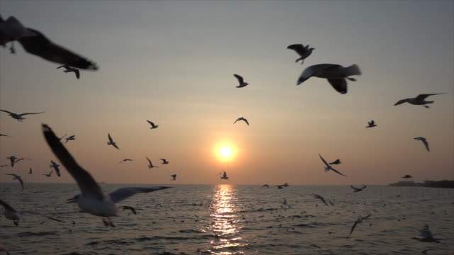 Slow Motion Seagull and sunset