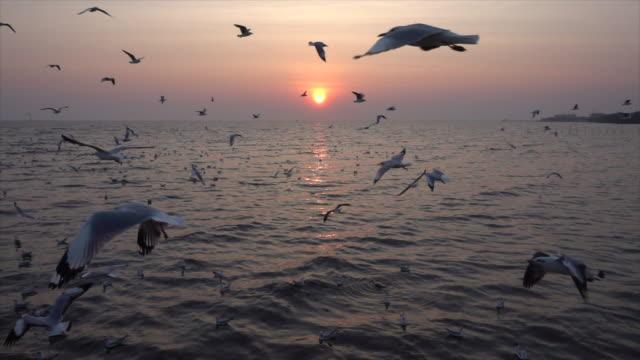 慢動作海鷗和日落 - 土耳其 個影片檔及 b 捲影像