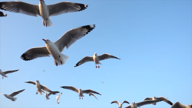 Slow Motion Seagull in nature Slow Motion Seagull in nature seagull stock videos & royalty-free footage
