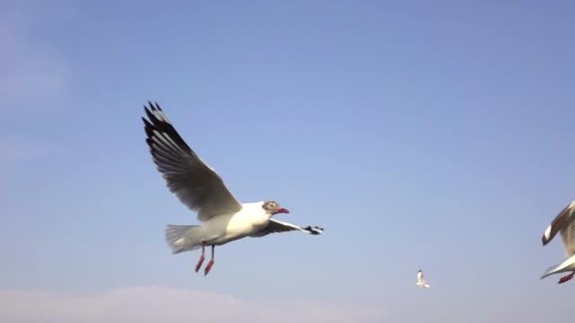 slow motion seagulls flying - battere le ali video stock e b–roll