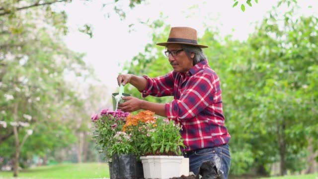 Slow motion: Senior man planting flower in a potting and watering it. Slow motion: Senior man planting flower in a potting and watering it. ornamental garden stock videos & royalty-free footage