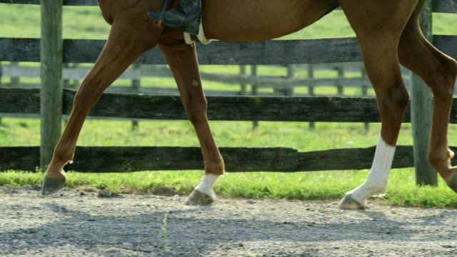 slow motion shot of a brown horses feet (with a rider) as it walks along a dirt road next to a wooden fence with green pasture in the background on a sunny day - cavallo purosangue video stock e b–roll