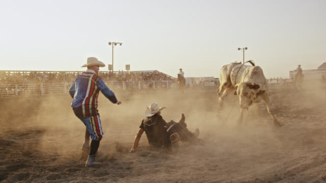 vídeos de stock e filmes b-roll de slow motion shot of a bull rider competing in a bull riding event before being thrown from the bull's back while the rodeo clown distracts the bull in a stadium full of people at sunset - touro animal macho