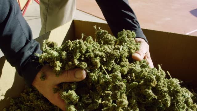 slow motion shot av en kaukasisk mans händer plocka upp och släppa en handfull torr, otrimmad marijuana (cannabis) knoppar i en kartong utomhus (hampa) - hasch bildbanksvideor och videomaterial från bakom kulisserna