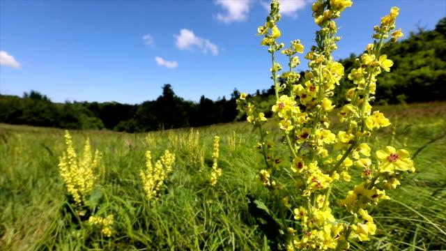 kırsal bir alanda bir çift çiçek yavaş çekim - sale stok videoları ve detay görüntü çekimi