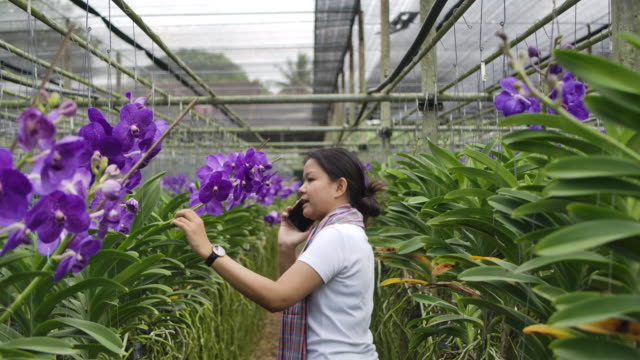 Slow motion shot of a Gardener purple vanda orchid Asian woman are  talking and selling flowers to a customer on the phone