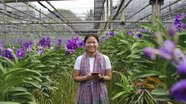 Slow motion shot of a Gardener purple vanda orchid Asian woman are  texting and selling flowers to a customer on the phone