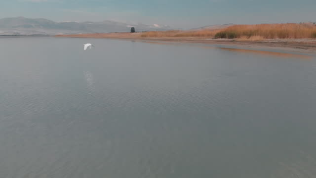 Slow Motion Shot of a Great Egret in Lake