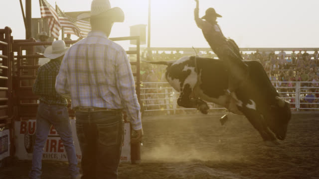 vídeos de stock e filmes b-roll de slow motion shot of a male bull rider competing in a bull riding event in a stadium full of people at sunset - touro animal macho