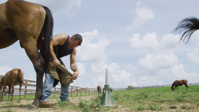 Slow Motion Shot of a Male Farrier in His Thirties Using a Rasp to File a Brown Horse's Hoof Outdoors in a Pasture on a Farm on a Sunny Day