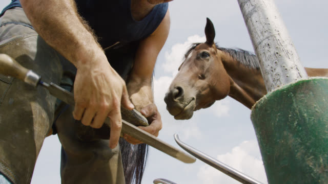 Slow Motion Shot of a Male Farrier in His Thirties Using a Rasp to File Down a Brown Horse's Hoof Outdoors as Another Horse Watches on a Farm on a Sunny Day