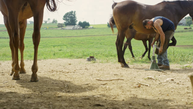 Slow Motion Shot of a Male Farrier in His Thirties Using a Rasp to File Down a Brown Horse's Hoof while Other Horses Watch Outdoors in a Pasture on a Farm on a Sunny Day