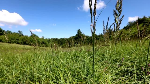 doğal bir kırsal alanın yavaş çekim çekimi - sale stok videoları ve detay görüntü çekimi
