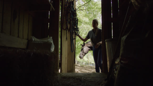 slow motion shot of a woman in her forties in silhouette opening the door of a barn with her horse behind her on a sunny day - rancher video stock e b–roll