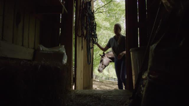 güneşli bir günde atıyla ahırın kapısını açan siluette kırklı yaşlarda bir kadının yavaş çekim çekimi - ahır stok videoları ve detay görüntü çekimi