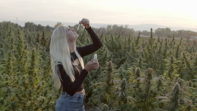Slow Motion Shot of a Young Female Holding and Dispensing an Eye Dropper Container of CBD Oil Surrounded by Herbal Cannabis Plants at a CBD Oil Hemp Marijuana Farm in Colorado Herbal Cannabis Plants in Slow Motion at a CBD Oil Hemp Marijuana Farm in Rural Grand Junction Colorado cbd oil stock videos & royalty-free footage