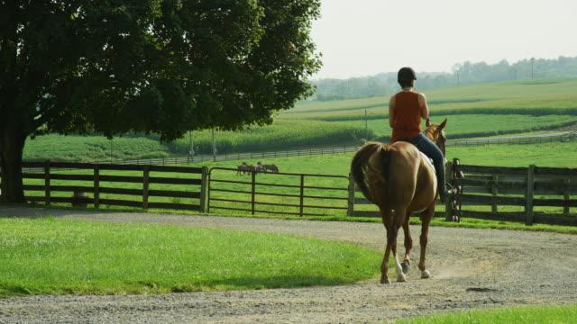 Slow Motion Shot of a Young Woman Wearing a Helmet Riding Her Brown Horse down a Dirt Road next to a Fenced In Pasture on a Sunny Day on a Horse Farm