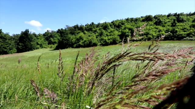 doğal çimenli bir alanda çiçeklerin yavaş çekim çekimi - sale stok videoları ve detay görüntü çekimi