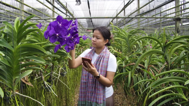 Slow motion shot of Gardener orchid Asian woman are taking care of flowers orchid plant farm small business