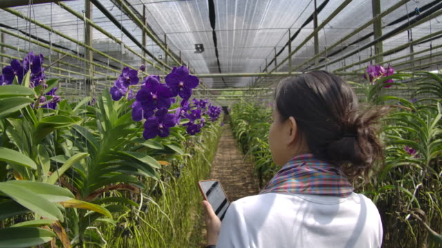 Slow motion shot of Gardener orchid Asian woman are taking care of flowers orchid plant farm small business, rear view shot