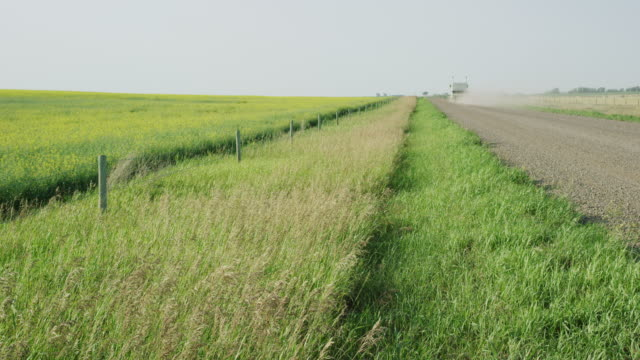 Slow Motion Shot of Rape (Canola) Plants Waving Gently in an Agricultural Field Next to Fence and Semi-Truck Driving Down a Dirt Road on a Partly Cloudy Day in Alberta, Canada
