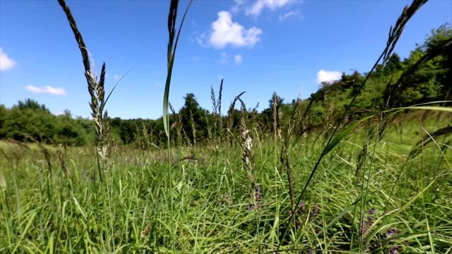 kırsal bir alanda bazı alan çiçekleri yavaş hareket çekim - sale stok videoları ve detay görüntü çekimi