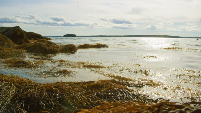 Slow Motion Shot of Waves and Kelp Gently Lapping on a Seashore near Portland, Maine (Atlantic Ocean) on a Sunny Day