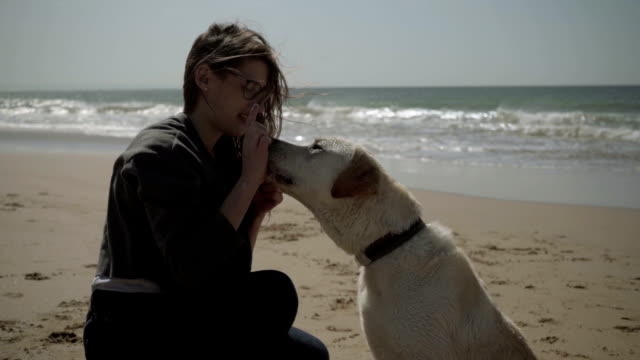 Slow motion shot of wet dog giving paws to female owner.
