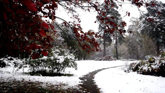 langsamer bewegungsschneefall im wintergarten - laub winter stock-videos und b-roll-filmmaterial