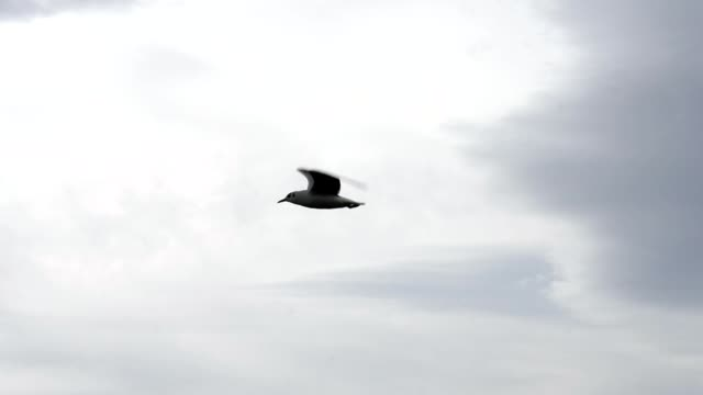 Slow Motion Soaring Seagull In The Sky.