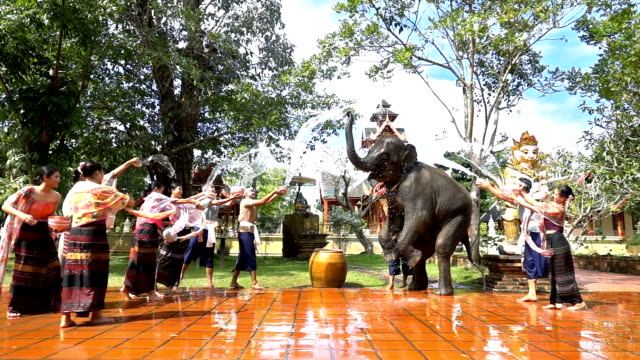 vídeos de stock, filmes e b-roll de slow motion songkran festival-mulheres e homens bonitos usam o traje tailandês de traditionnel que espirra a água com o elefante no fundo do templo - ano novo budista
