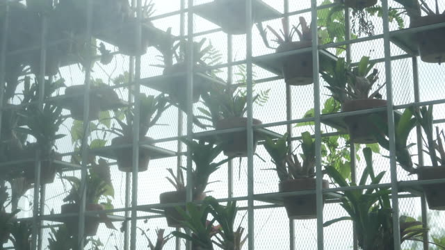 slow motion; sprinkler spraying water in vertical garden