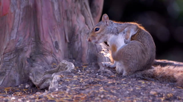 Slow Motion Squirrel video