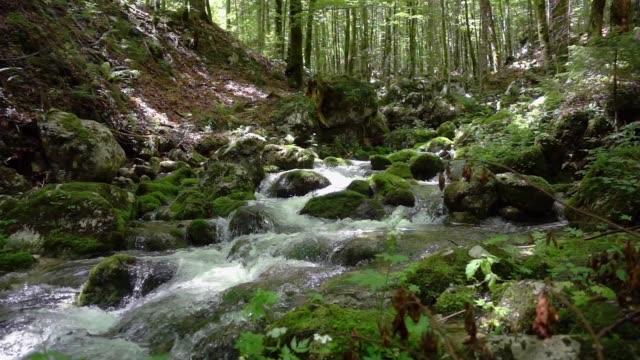 山河的慢運動地表水 - 溪 個影片檔及 b 捲影像