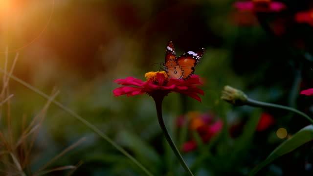 slow motion the beautiful butterfly flying on flower - butterfly stock videos and b-roll footage