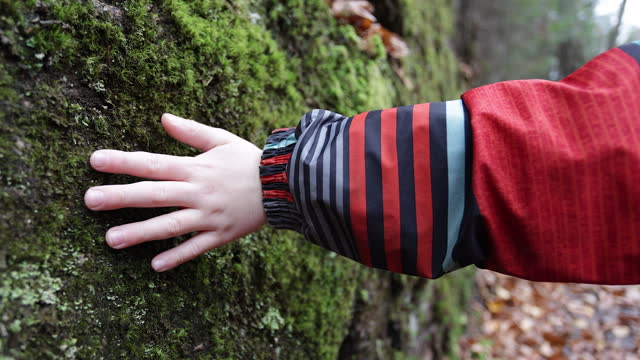 Slow motion Video of a child hand touches the lichen on a rock