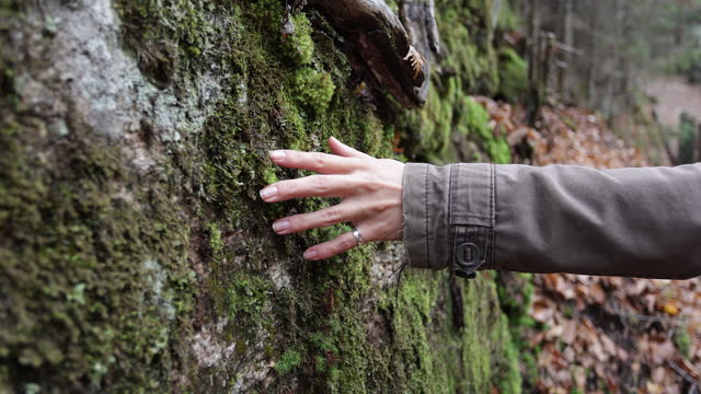 Slow motion Video of a Female hand touches the lichen on a rock