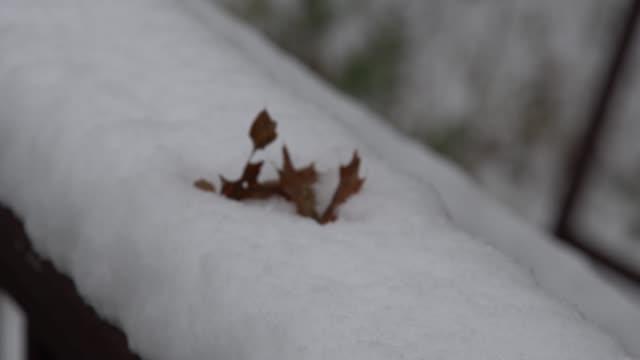 stockvideo's en b-roll-footage met slow-motion video van een blad in de sneeuw. - s
