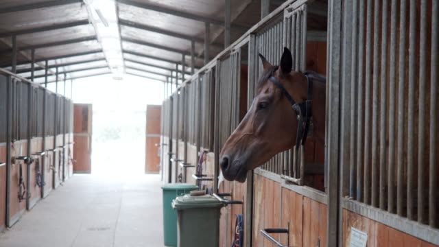 Slow motion video of horse stalls in a horse riding school