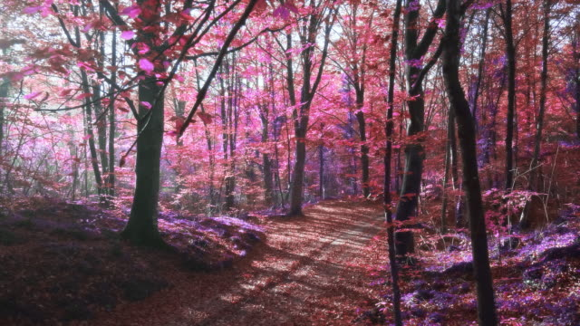 Slow motion video of sunlight over an surreal purple forest
