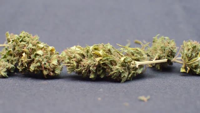 slow motion, syn på marijuana knoppar passerar på svart bakgrund. detaljer om cannabisplantan. - thc bildbanksvideor och videomaterial från bakom kulisserna