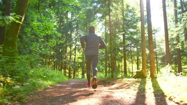 slo mo ts manlig löpare som springer på en skogsstig i solsken - liten skog bildbanksvideor och videomaterial från bakom kulisserna