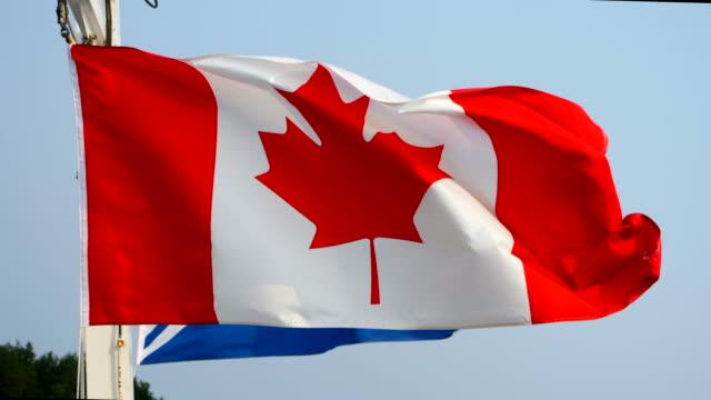 slow motion bred skott av kanada nationella kanadensiska flaggsymbol blåser i vinden - kanvas bildbanksvideor och videomaterial från bakom kulisserna
