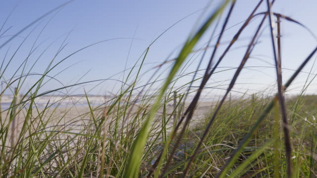Slow Motion. Wind blowing long seagrass, ocean in background. Slow Motion. Wind blowing long seagrass, ocean in background. south stock videos & royalty-free footage