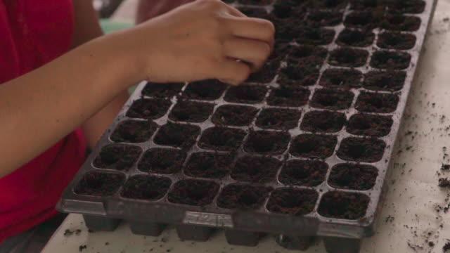 slow motion woman hand sowing watermelon seeds on tray. - taca filmów i materiałów b-roll