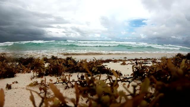 slow motion: sonnenaufgang am tropischen strand. - algen stock-videos und b-roll-filmmaterial