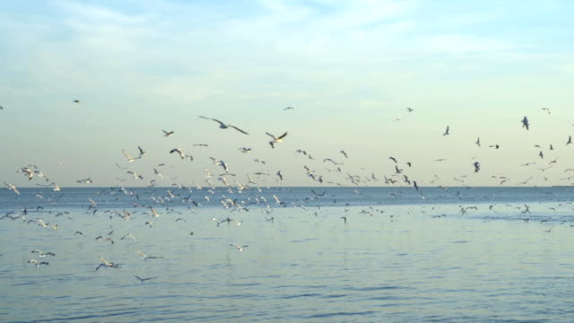 Slow motion,The seagull flies in the sea, the seagull flies to escape the cold from the Siberian region. Slow motion,The seagull flies in the sea, the seagull flies to escape the cold from the Siberian region. seagull stock videos & royalty-free footage